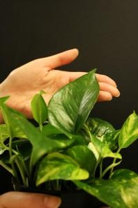 Green plant 2 - sxc NOTIFY Rendy id 799888